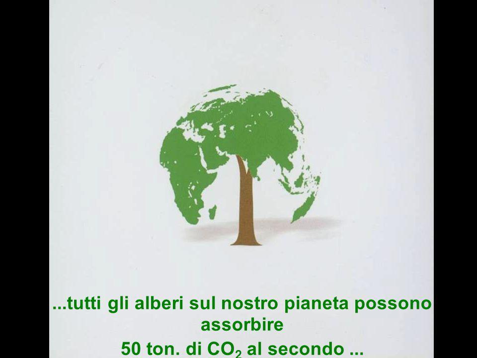 Partecipazione Pubblica www.transportlearning.net...tutti gli alberi sul nostro pianeta possono assorbire 50 ton.