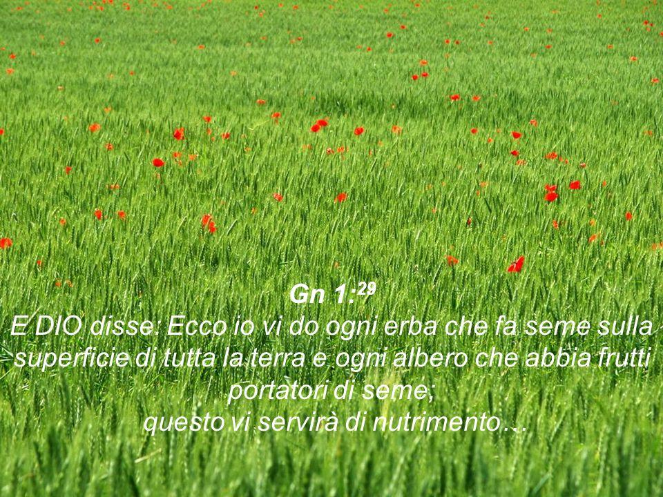 Gn 1: 29 E DIO disse: Ecco io vi do ogni erba che fa seme sulla superficie di tutta la terra e ogni albero che abbia frutti portatori di seme; questo