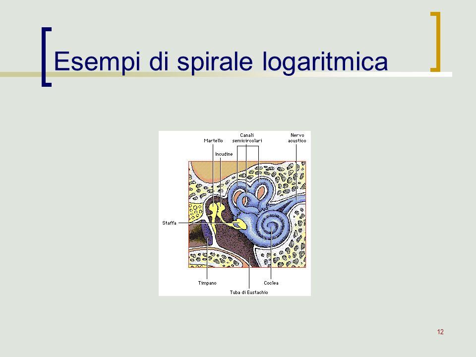 12 Esempi di spirale logaritmica