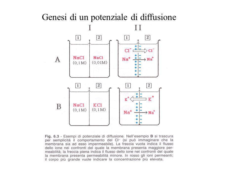 Genesi di un potenziale di diffusione