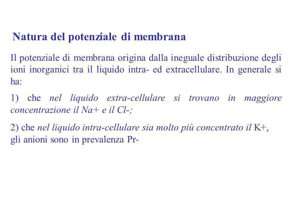 Il potenziale di membrana origina dalla ineguale distribuzione degli ioni inorganici tra il liquido intra- ed extracellulare. In generale si ha: 1) ch