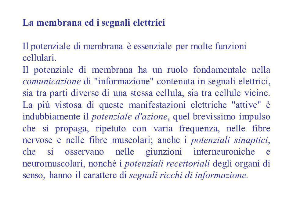 La membrana ed i segnali elettrici Il potenziale di membrana è essenziale per molte funzioni cellulari. Il potenziale di membrana ha un ruolo fondamen
