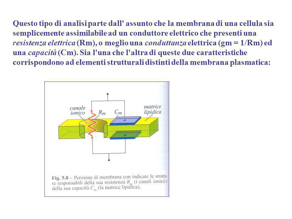Questo tipo di analisi parte dall' assunto che la membrana di una cellula sia semplicemente assimilabile ad un conduttore elettrico che presenti una r