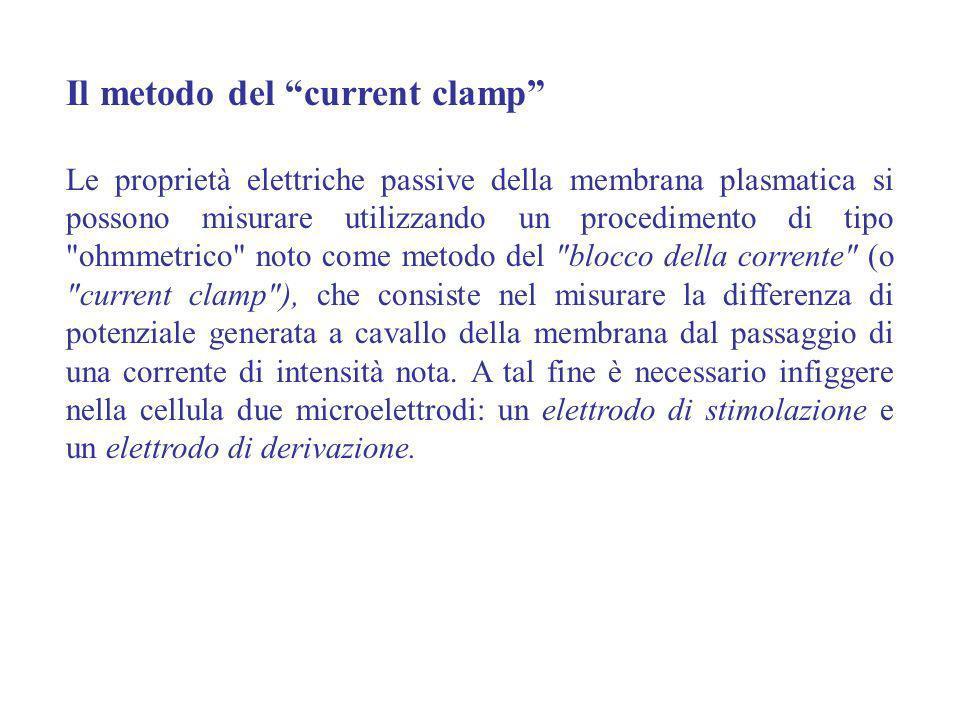 Il metodo del current clamp Le proprietà elettriche passive della membrana plasmatica si possono misurare utilizzando un procedimento di tipo