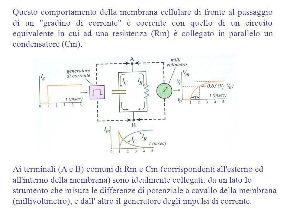 Questo comportamento della membrana cellulare di fronte al passaggio di un