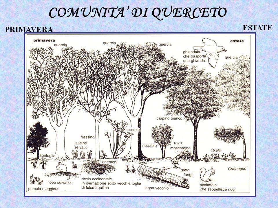 COMUNITA DI QUERCETO PRIMAVERA ESTATE