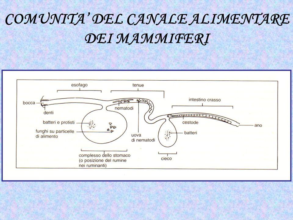 COMUNITA DEL CANALE ALIMENTARE DEI MAMMIFERI