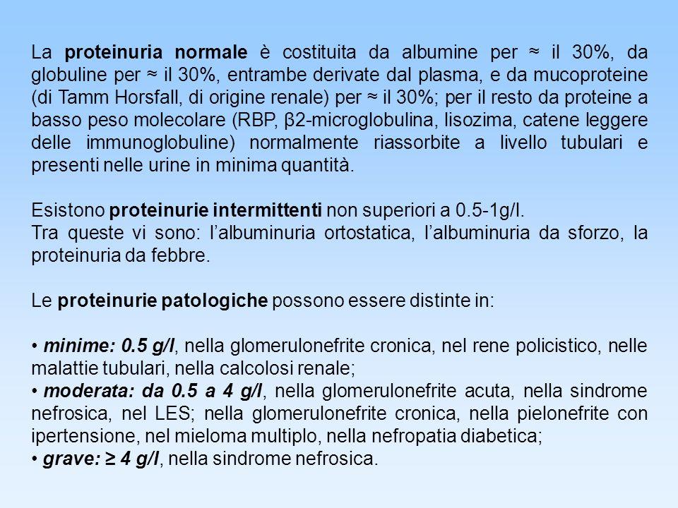 La proteinuria normale è costituita da albumine per il 30%, da globuline per il 30%, entrambe derivate dal plasma, e da mucoproteine (di Tamm Horsfall