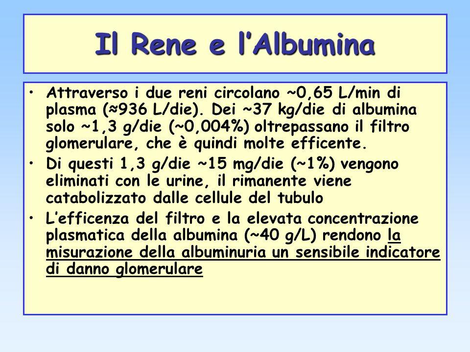 Il Rene e lAlbumina Attraverso i due reni circolano ~0,65 L/min di plasma (936 L/die). Dei ~37 kg/die di albumina solo ~1,3 g/die (~0,004%) oltrepassa