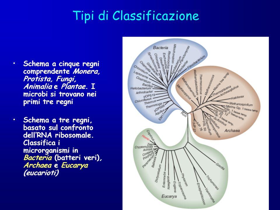 Tipi di Classificazione Schema a cinque regni comprendente Monera, Protista, Fungi, Animalia e Plantae. I microbi si trovano nei primi tre regni Schem