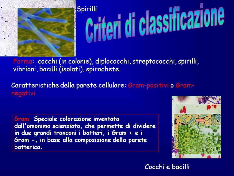 Cocchi e bacilli Spirilli Forma: cocchi (in colonie), diplococchi, streptococchi, spirilli, vibrioni, bacilli (isolati), spirochete. Caratteristiche d