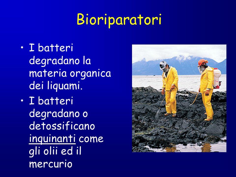 I batteri degradano la materia organica dei liquami. I batteri degradano o detossificano inquinanti come gli olii ed il mercurio Bioriparatori