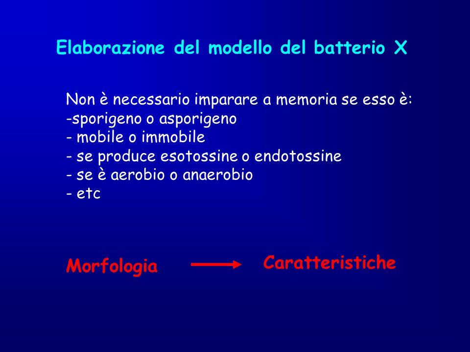 Elaborazione del modello del batterio X Non è necessario imparare a memoria se esso è: -sporigeno o asporigeno - mobile o immobile - se produce esotos