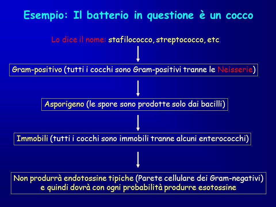 Esempio: Il batterio in questione è un cocco Lo dice il nome: stafilococco, streptococco, etc. Gram-positivo (tutti i cocchi sono Gram-positivi tranne