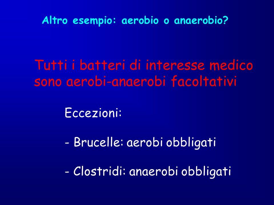 Altro esempio: aerobio o anaerobio? Tutti i batteri di interesse medico sono aerobi-anaerobi facoltativi Eccezioni: - Brucelle: aerobi obbligati - Clo