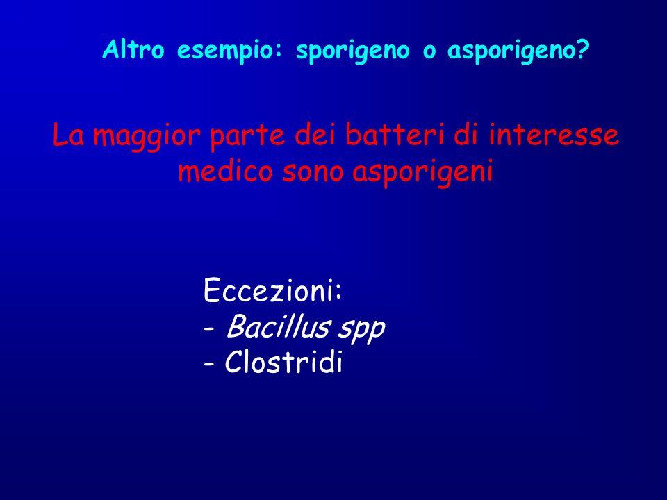 Altro esempio: sporigeno o asporigeno? La maggior parte dei batteri di interesse medico sono asporigeni Eccezioni: - Bacillus spp - Clostridi