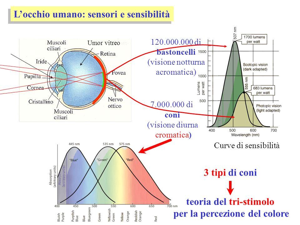 Locchio umano: sensori e sensibilità Umor vitreo 3 tipi di coni teoria del tri-stimolo per la percezione del colore Curve di sensibilità 120.000.000 d