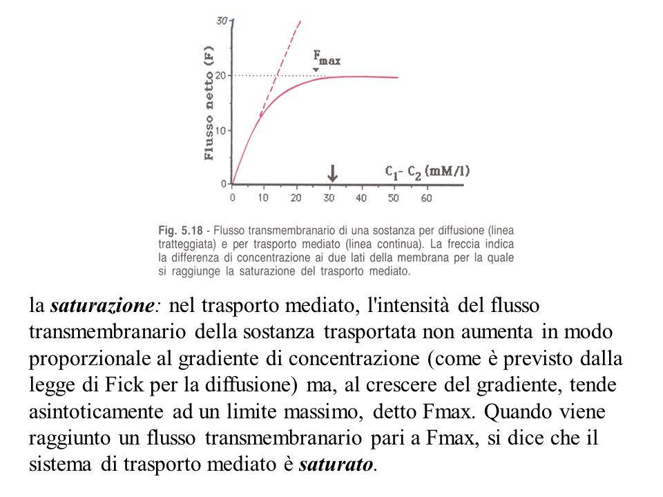 la saturazione: nel trasporto mediato, l'intensità del flusso transmembranario della sostanza trasportata non aumenta in modo proporzionale al gradien