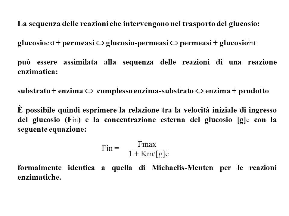 La sequenza delle reazioni che intervengono nel trasporto del glucosio: glucosio ext + permeasi glucosio-permeasi permeasi + glucosio int può essere a