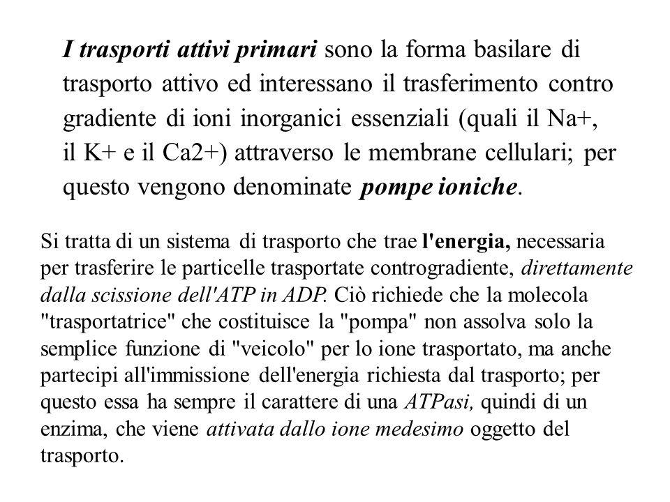 I trasporti attivi primari sono la forma basilare di trasporto attivo ed interessano il trasferimento contro gradiente di ioni inorganici essenziali (