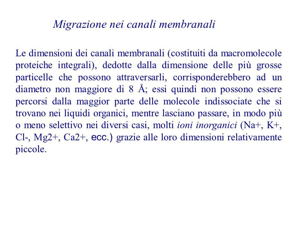 Migrazione nei canali membranali Le dimensioni dei canali membranali (costituiti da macromolecole proteiche integrali), dedotte dalla dimensione delle