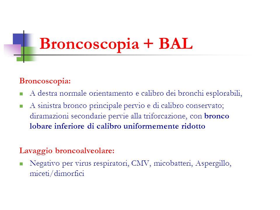 Broncoscopia: A destra normale orientamento e calibro dei bronchi esplorabili, A sinistra bronco principale pervio e di calibro conservato; diramazion