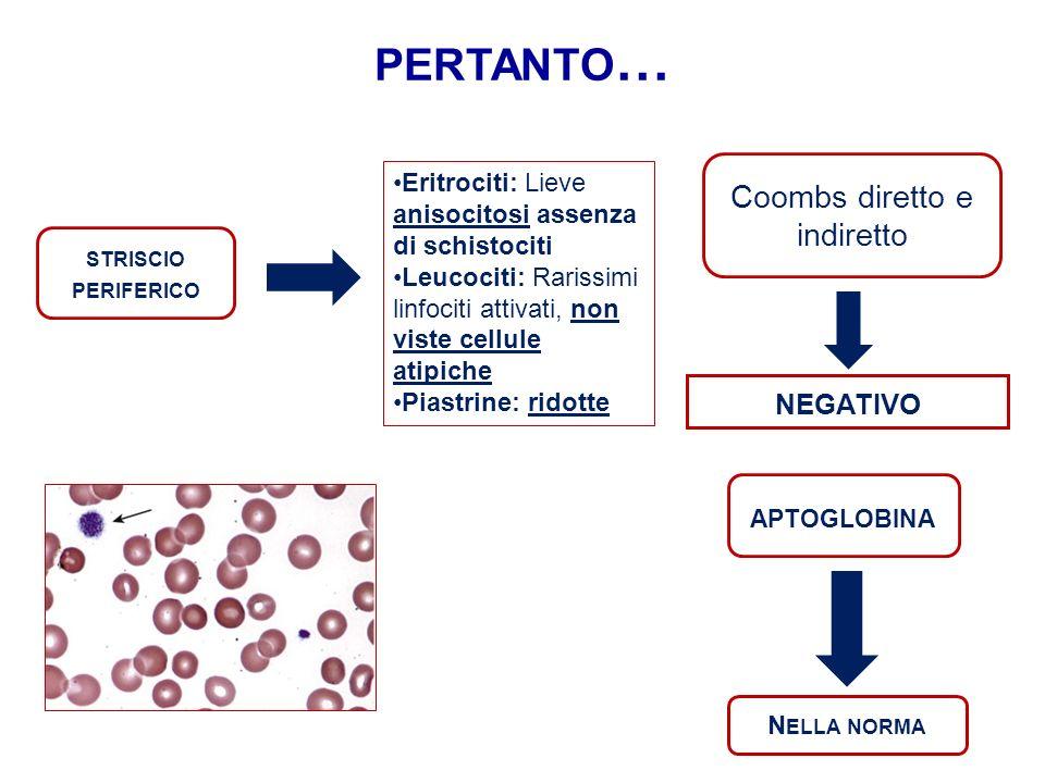 STRISCIO PERIFERICO Eritrociti: Lieve anisocitosi assenza di schistociti Leucociti: Rarissimi linfociti attivati, non viste cellule atipiche Piastrine