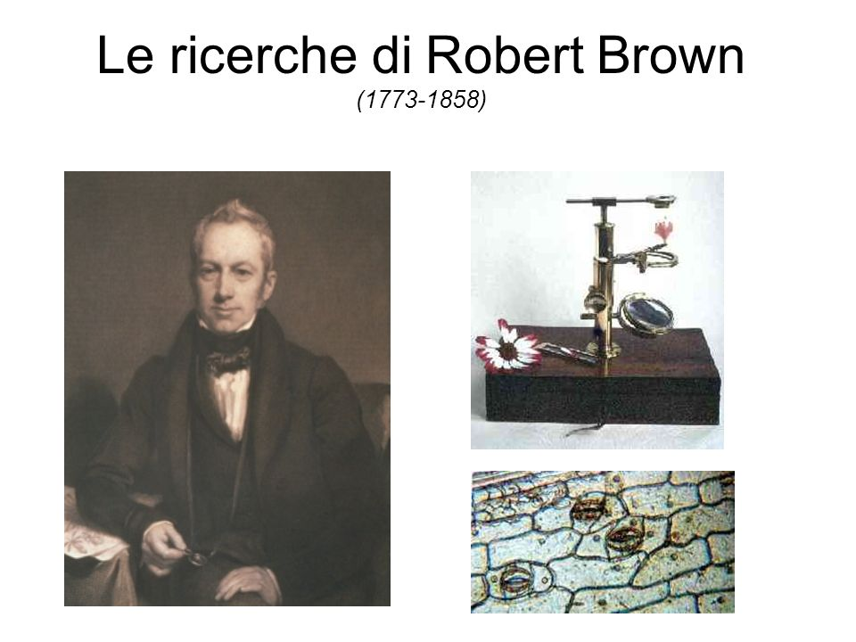 Le ricerche di Robert Brown (1773-1858)