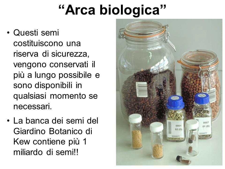 Arca biologica Questi semi costituiscono una riserva di sicurezza, vengono conservati il più a lungo possibile e sono disponibili in qualsiasi momento