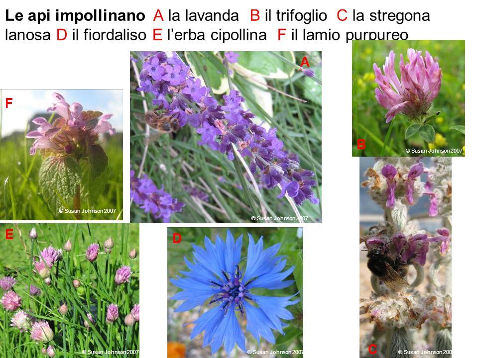 Osservazioni raccolte sulla tipologia di fiori visitati dalle api e sulla frequenza delle visite ad inizio estate