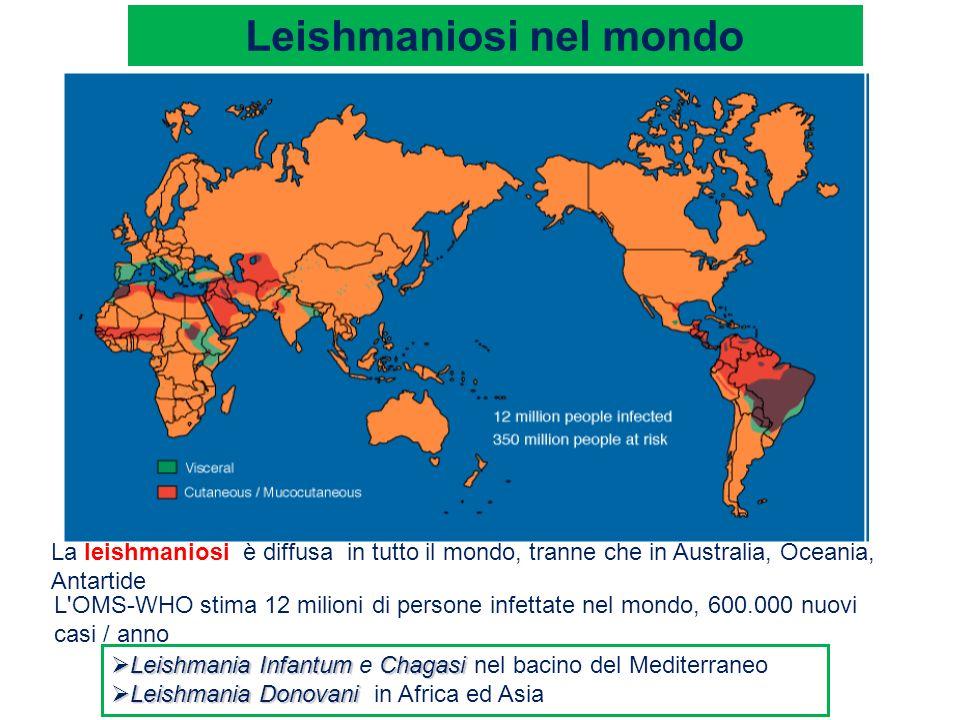 Leishmaniosi nel mondo La leishmaniosi è diffusa in tutto il mondo, tranne che in Australia, Oceania, Antartide L'OMS-WHO stima 12 milioni di persone
