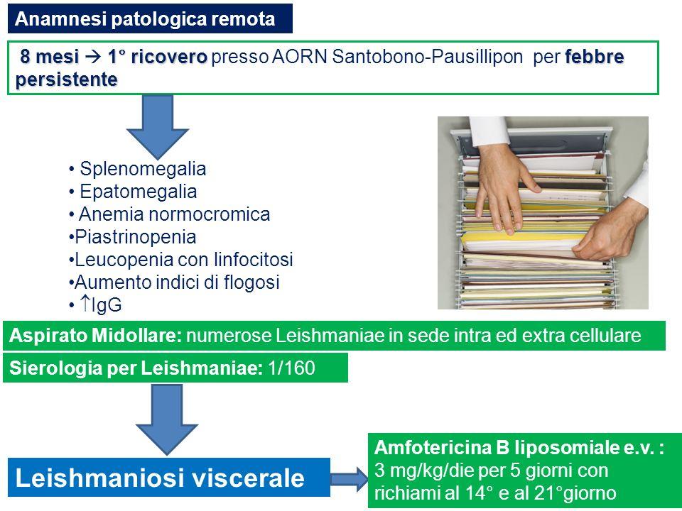 TERAPIA E POSOLOGIA (Food and drug Administration) Amfotericina B 3 mg/kg e.v.