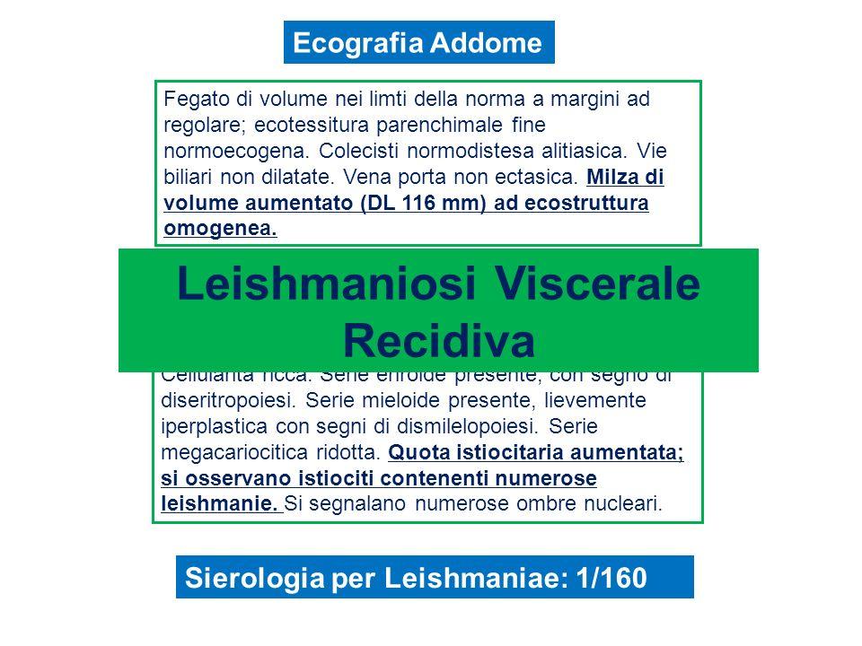 Leishmaniosi Malattia infettiva provocata da protozoi del genere Leishmania, parassiti delluomo e di numerosi animali domestici e selvatici