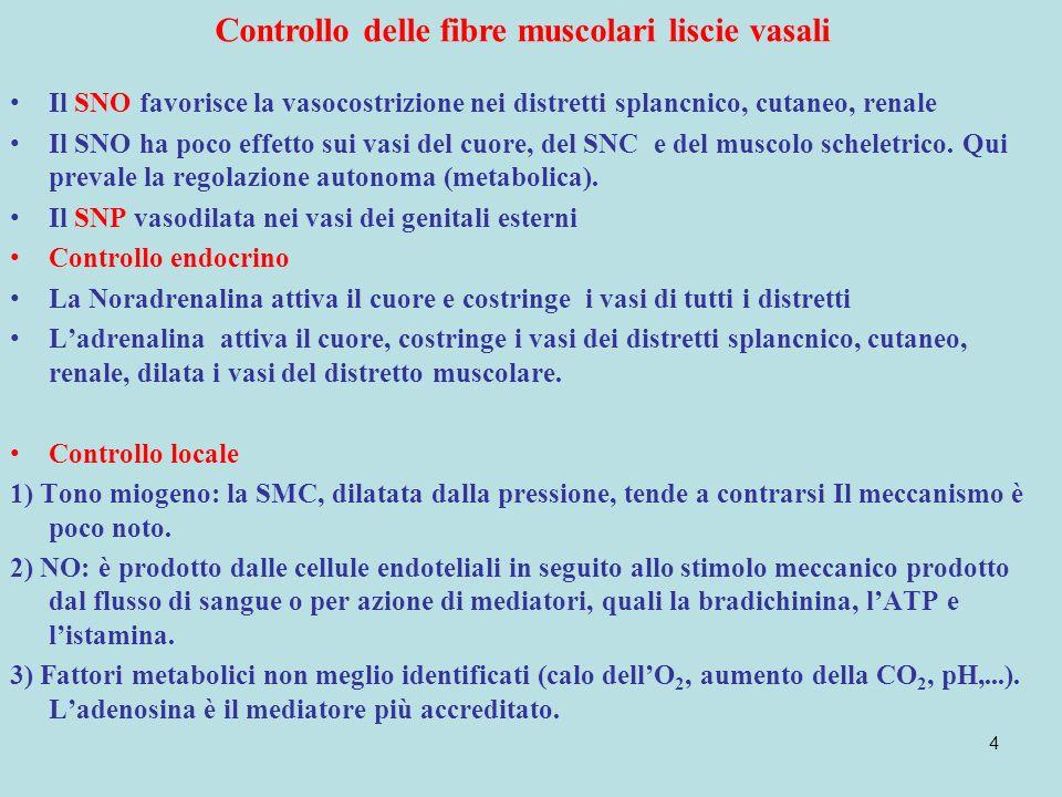 4 Controllo delle fibre muscolari liscie vasali Il SNO favorisce la vasocostrizione nei distretti splancnico, cutaneo, renale Il SNO ha poco effetto sui vasi del cuore, del SNC e del muscolo scheletrico.