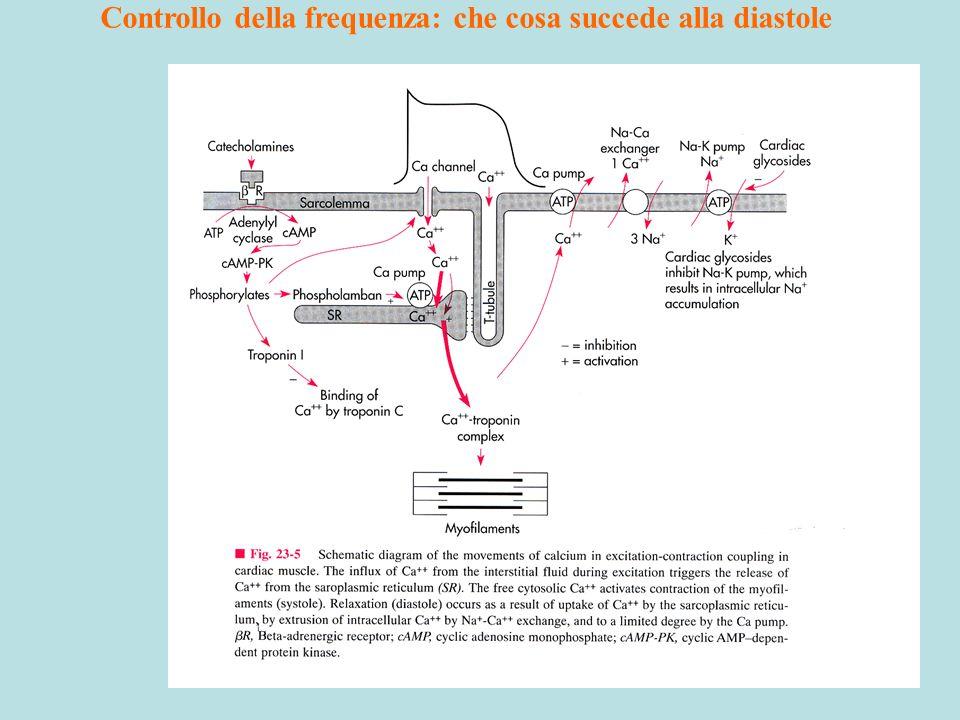 11 Controllo della frequenza: che cosa succede alla diastole