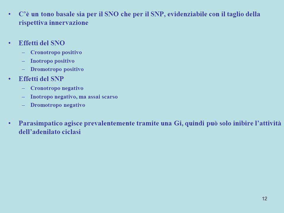 12 Cè un tono basale sia per il SNO che per il SNP, evidenziabile con il taglio della rispettiva innervazione Effetti del SNO –Cronotropo positivo –In