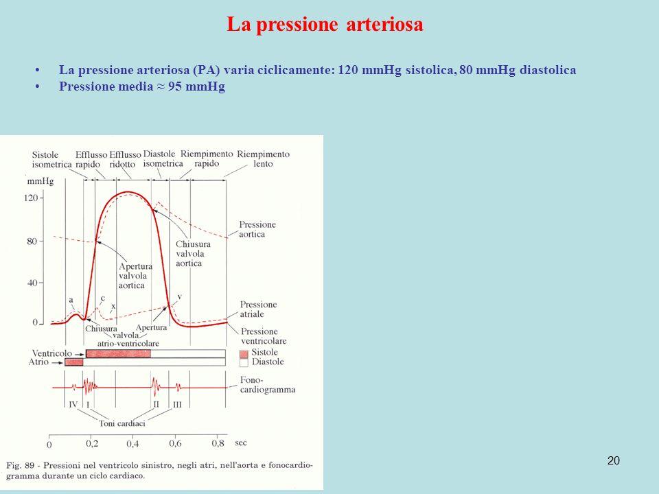 20 La pressione arteriosa La pressione arteriosa (PA) varia ciclicamente: 120 mmHg sistolica, 80 mmHg diastolica Pressione media 95 mmHg