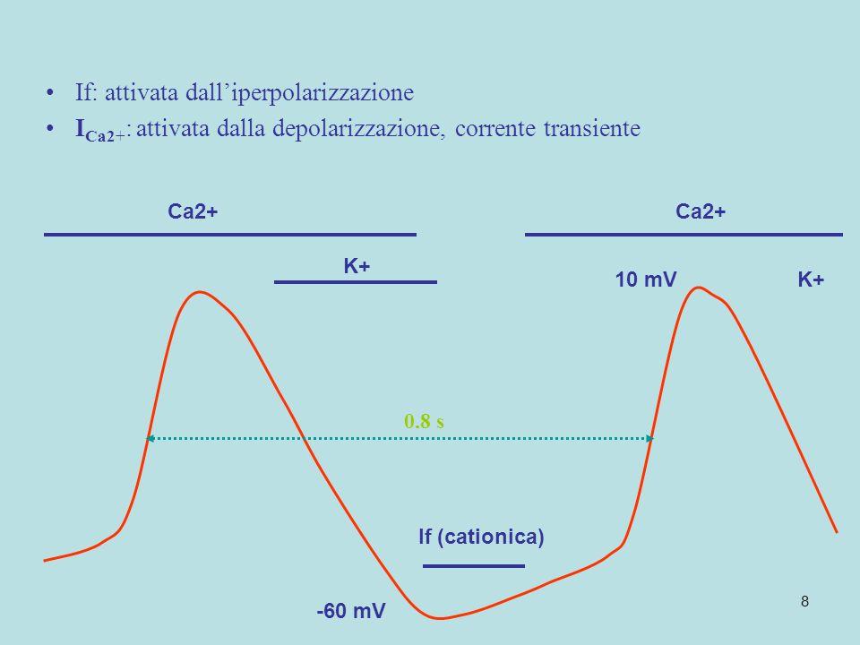 8 10 mV If (cationica) Ca2+ -60 mV If: attivata dalliperpolarizzazione I Ca2+ : attivata dalla depolarizzazione, corrente transiente K+ 0.8 s