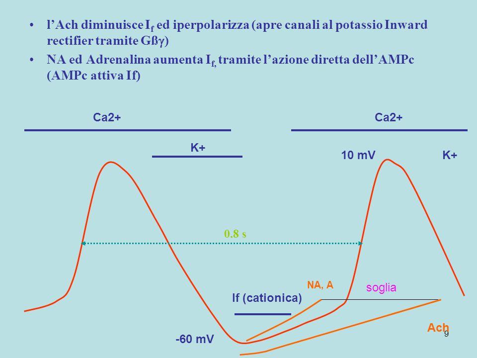 9 10 mV If (cationica) Ca2+ -60 mV K+ 0.8 s lAch diminuisce I f ed iperpolarizza (apre canali al potassio Inward rectifier tramite Gß ) NA ed Adrenali