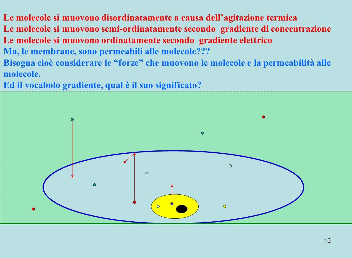 10 Le molecole si muovono disordinatamente a causa dellagitazione termica Le molecole si muovono semi-ordinatamente secondo gradiente di concentrazion