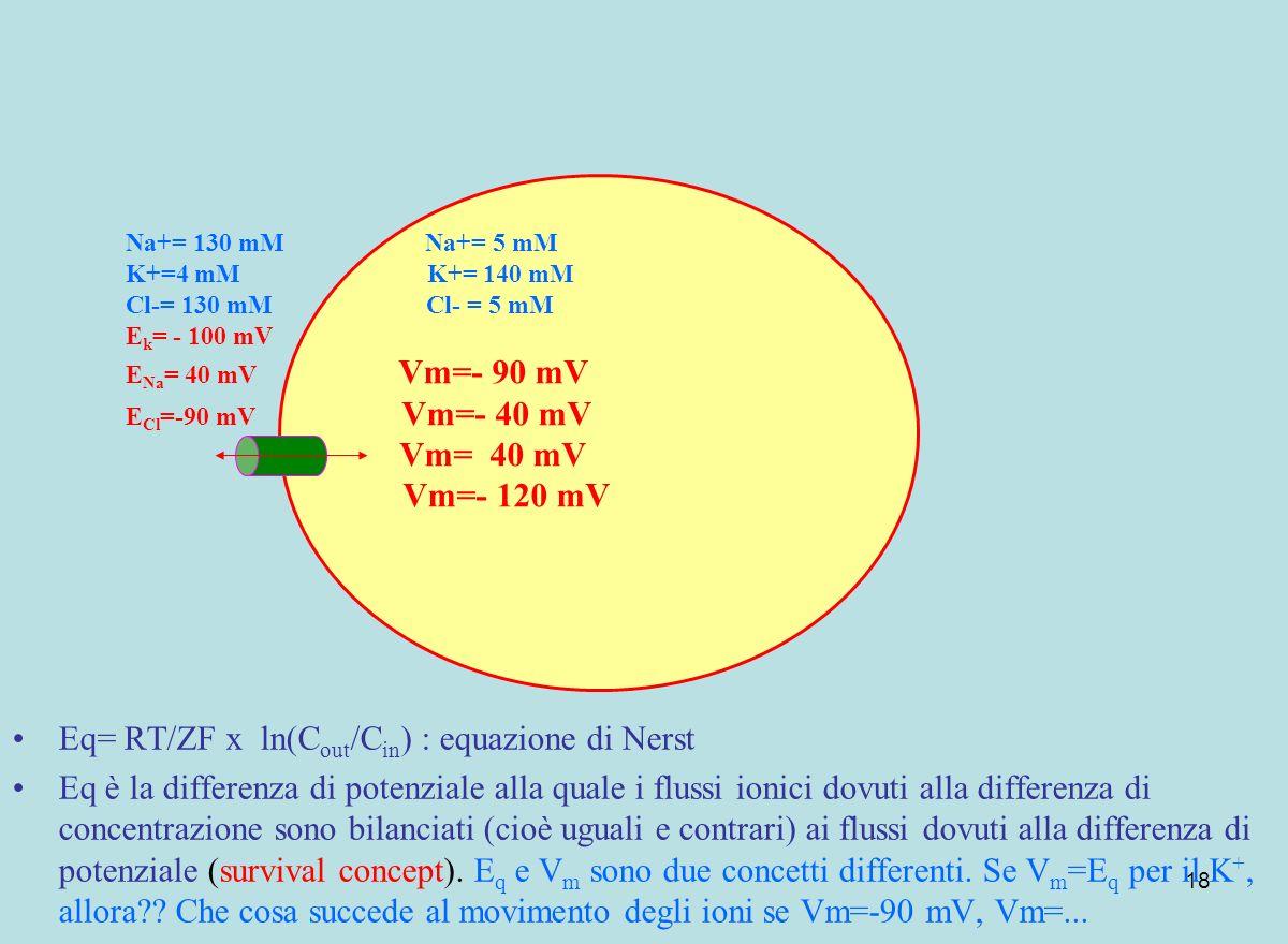 18 Eq= RT/ZF x ln(C out /C in ) : equazione di Nerst Eq è la differenza di potenziale alla quale i flussi ionici dovuti alla differenza di concentrazi