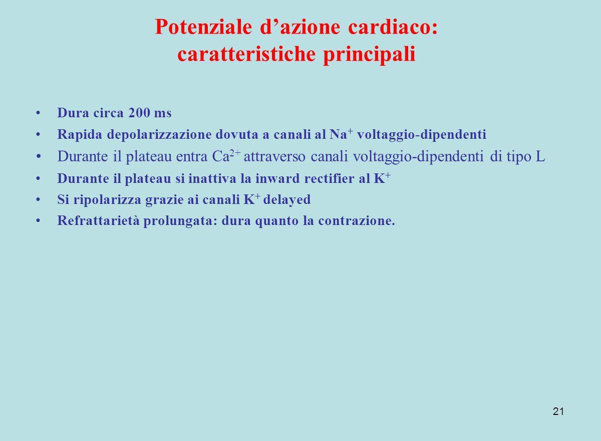21 Potenziale dazione cardiaco: caratteristiche principali Dura circa 200 ms Rapida depolarizzazione dovuta a canali al Na + voltaggio-dipendenti Dura
