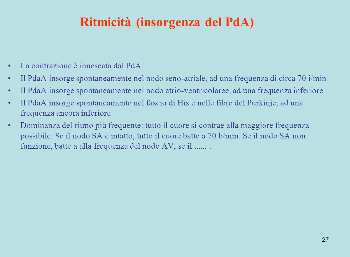 27 Ritmicità (insorgenza del PdA) La contrazione è innescata dal PdA Il PdaA insorge spontaneamente nel nodo seno-atriale, ad una frequenza di circa 7