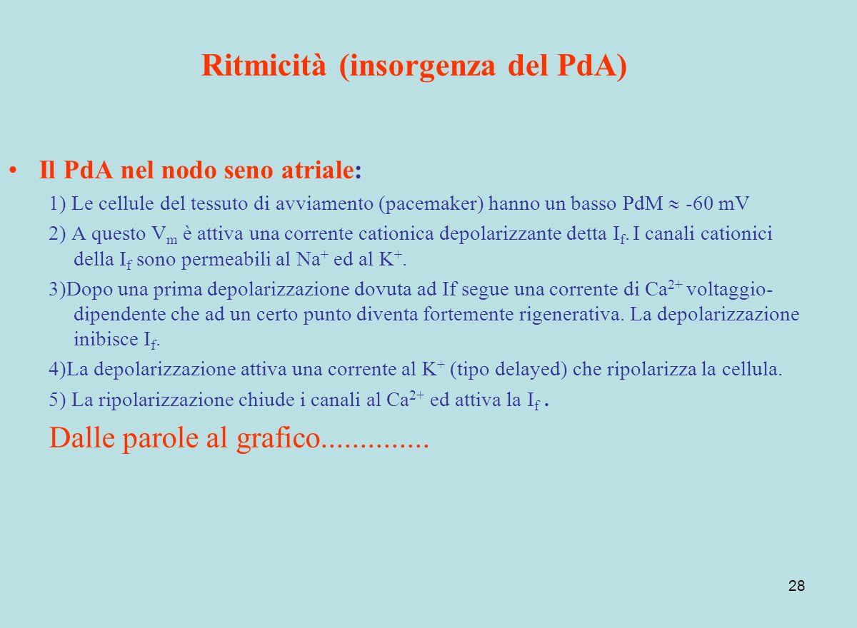 28 Ritmicità (insorgenza del PdA) Il PdA nel nodo seno atriale: 1) Le cellule del tessuto di avviamento (pacemaker) hanno un basso PdM -60 mV 2) A que