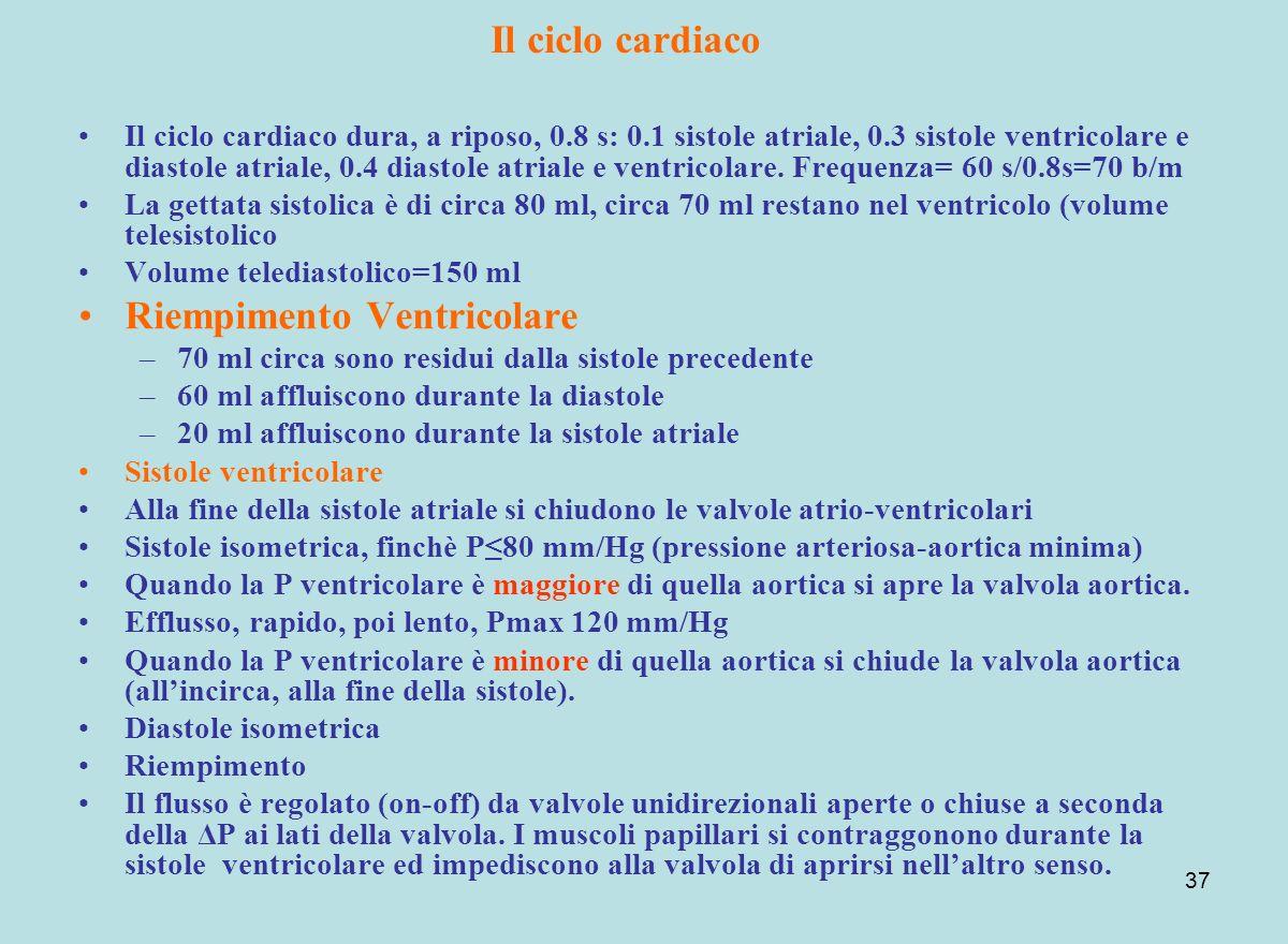 37 Il ciclo cardiaco Il ciclo cardiaco dura, a riposo, 0.8 s: 0.1 sistole atriale, 0.3 sistole ventricolare e diastole atriale, 0.4 diastole atriale e