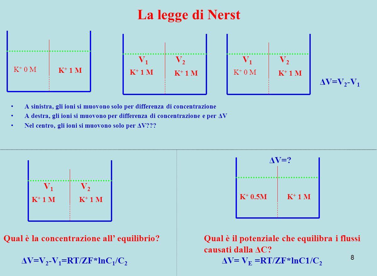 8 La legge di Nerst A sinistra, gli ioni si muovono solo per differenza di concentrazione A destra, gli ioni si muovono per differenza di concentrazio