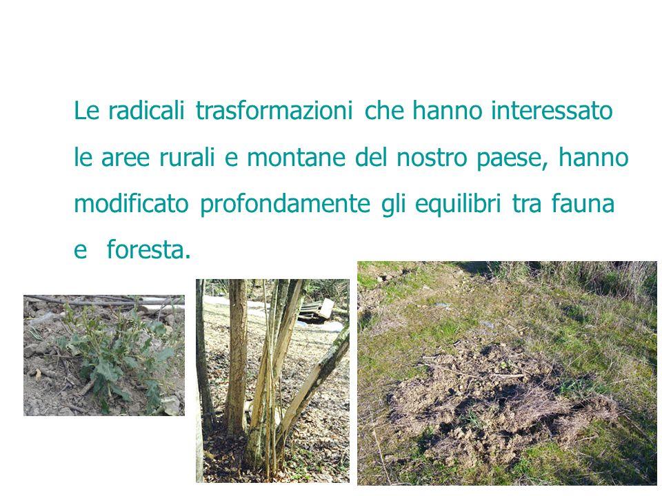 Le radicali trasformazioni che hanno interessato le aree rurali e montane del nostro paese, hanno modificato profondamente gli equilibri tra fauna e f
