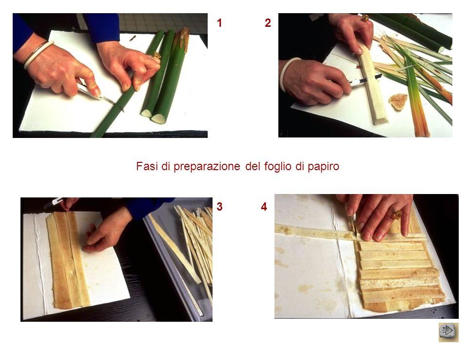 12 34 Fasi di preparazione del foglio di papiro