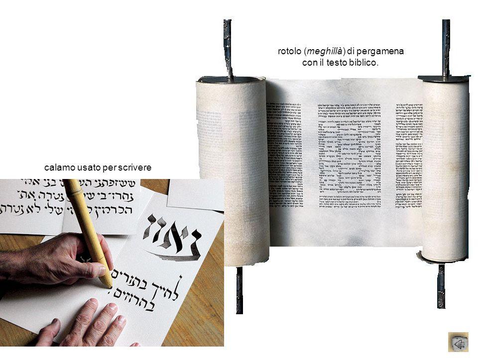 rotolo (meghillà) di pergamena con il testo biblico. calamo usato per scrivere
