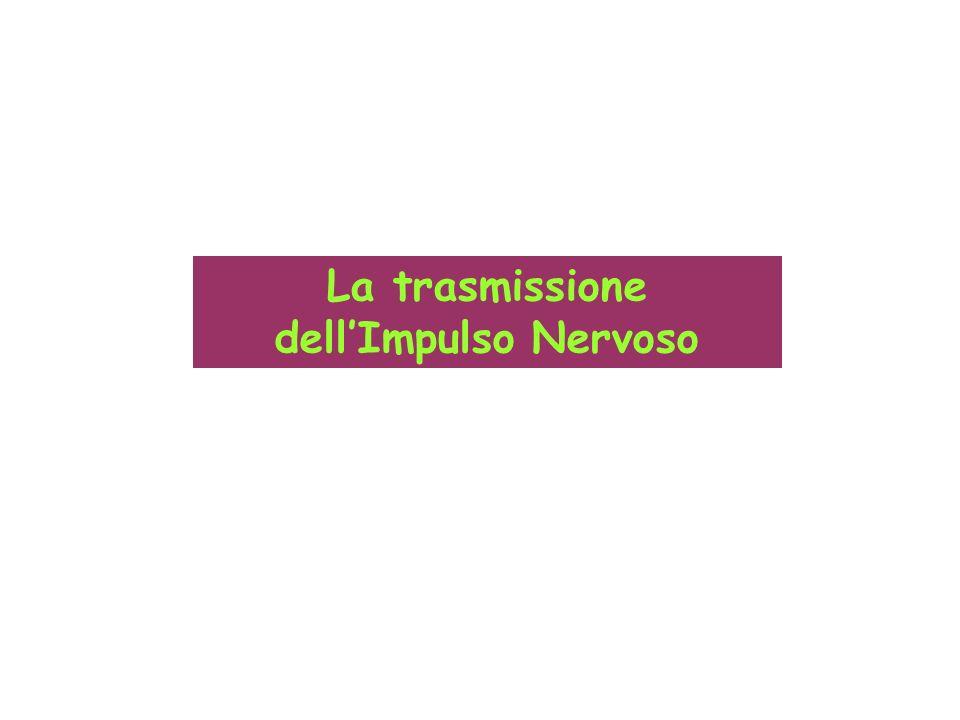 La trasmissione dellImpulso Nervoso